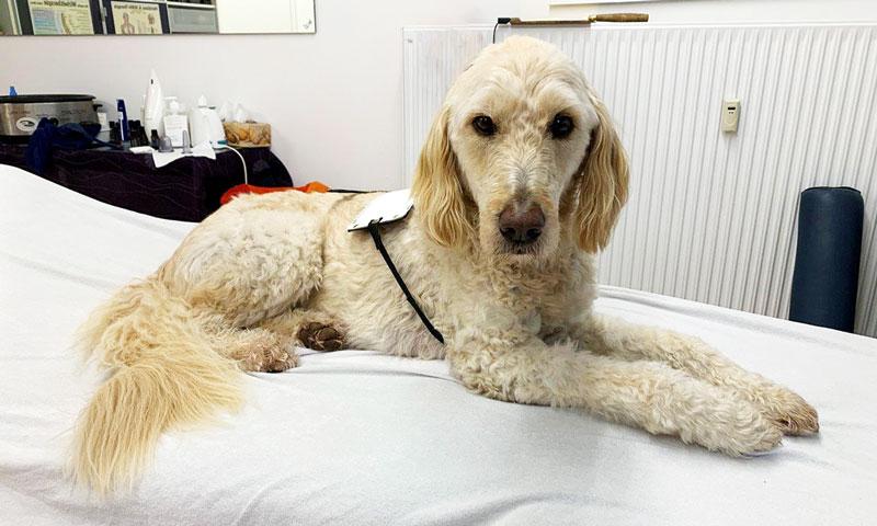 Bioresonanztherapie auch beim Tier: bei Allergien und Schmerzen