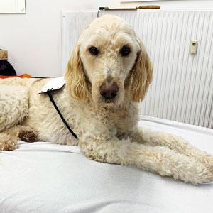 Zell-check & Bioresonanz-Therapie (auch für Ihr Tier)